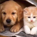 Подогрев для кошек и собак