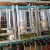 Подогрев поилок для животных безопасный 24в