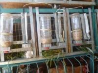Подогрев поилок безопасный 12 - 24 вольт из карбоновой кабеля в силиконовой изоляции