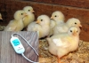 Подогрев цыплят 50 * 100 Двухступенчатый регулятор мощности