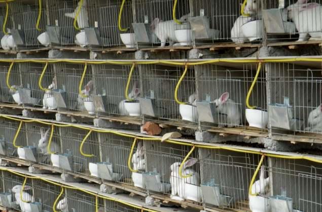 Поилки из бутылки для кроликов 77